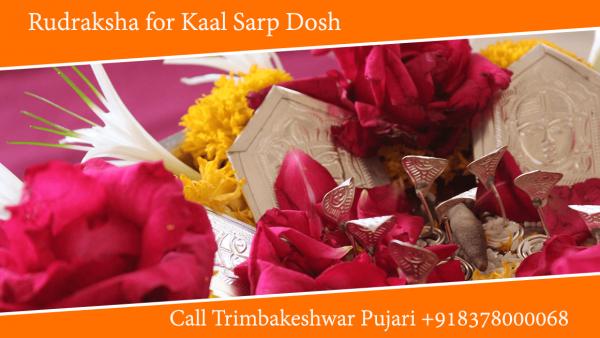 Rudraksha for Kaal Sarp Dosh, Kavach and Yantra