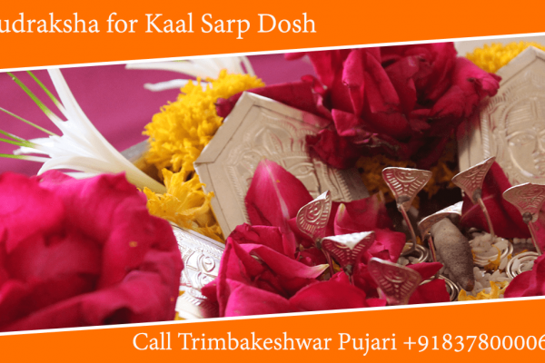 Rudraksha for Kaal Sarp Dosh, Kavach and Yantra